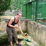 Colobus Conservation