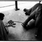 Lampang Elephant Hospital, Thailand