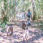 Baboon Forest School