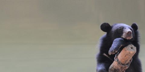 We Animals | Bear
