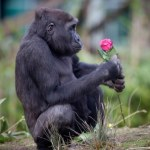 Apes Appreciate Beauty